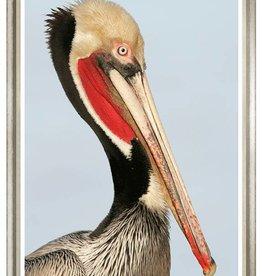 Colonial Pelican Image 1