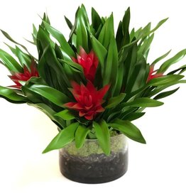 Bromeliad Plants in Faux Water with Moss (Red)