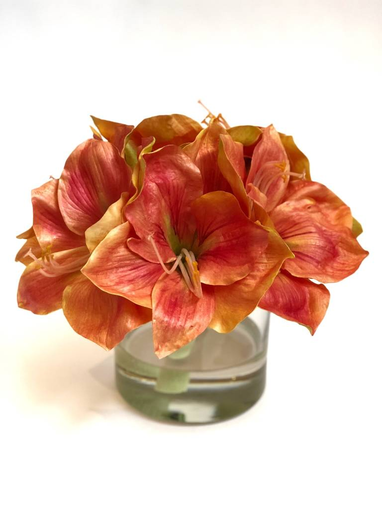 """Amaryllis x3 in 5"""" Cylinder-Faux Water (Coral)"""