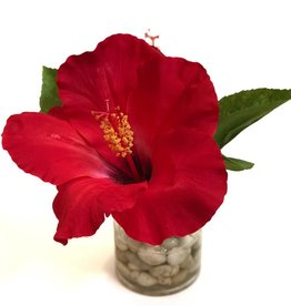 "Hibiscus in 3"" Cylinder with Faux Water/Stones (Red)"