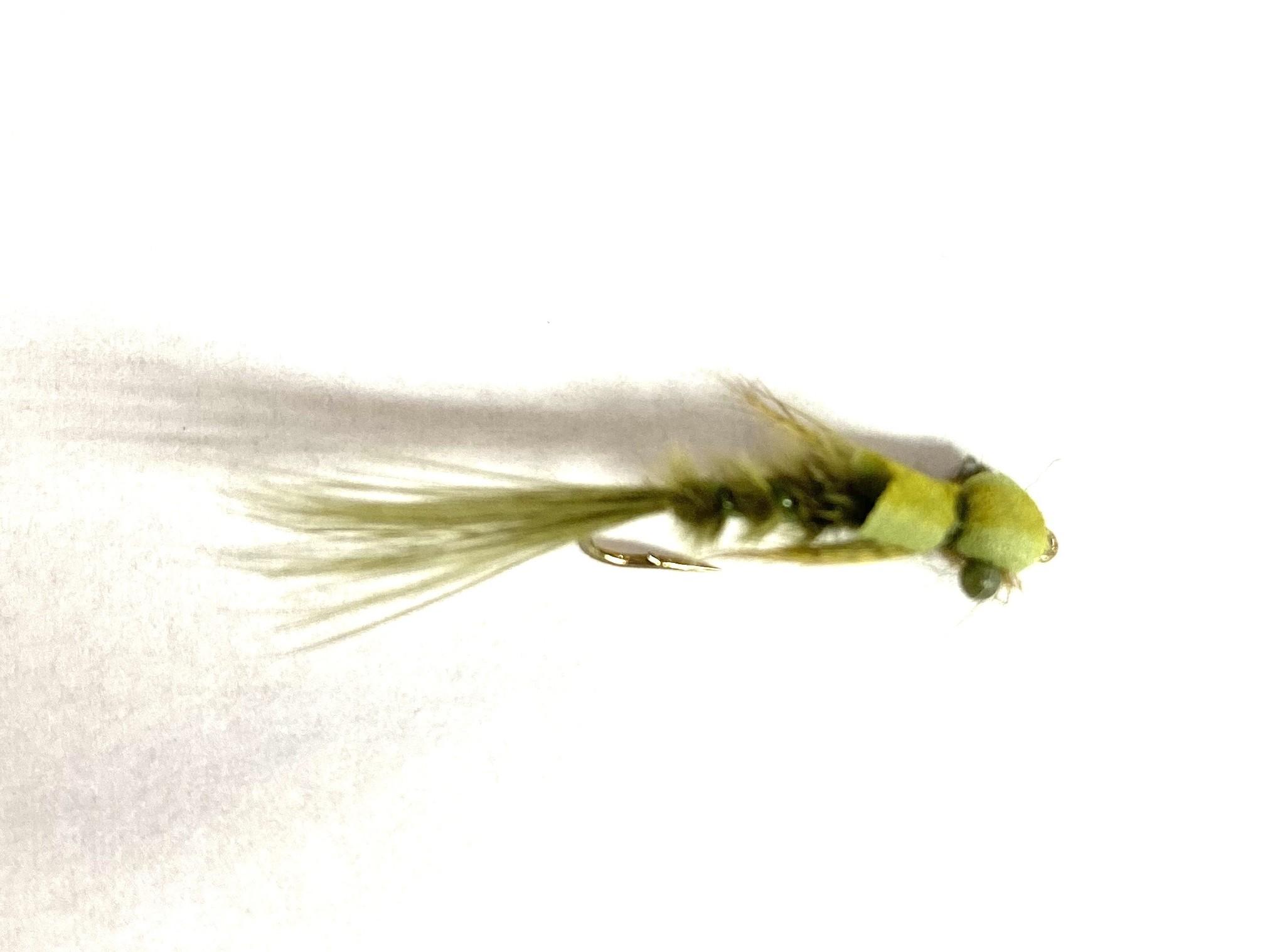 Picky Fish Damsel