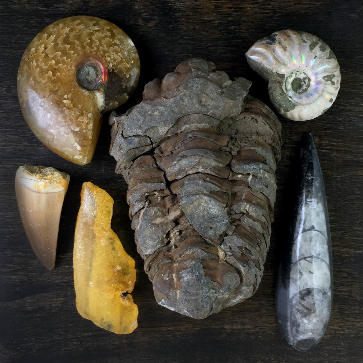 Prehistoric 6-Piece Assortment