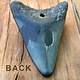 "-SOLD- Megalodon  2"" Fossil Tooth"