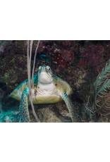 72 Aquatics Belize - May 2019
