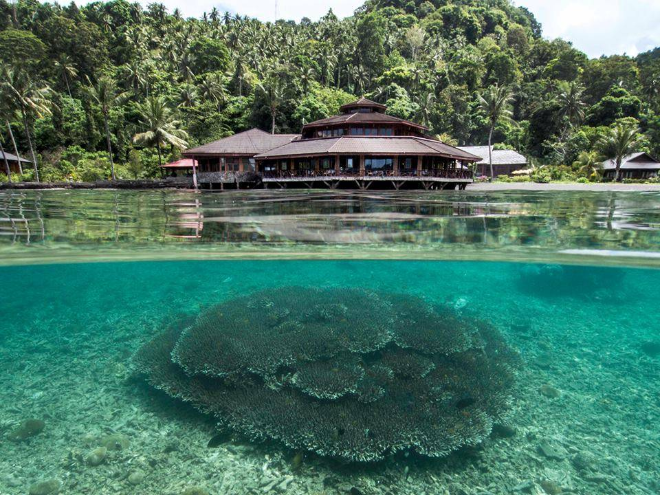 Lembeh Strait, Indonesia September 2019