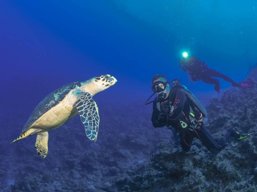 72 Aquatics Grand Cayman - July 2019