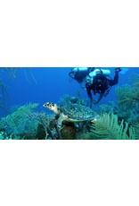 72 Aquatics Turks & Caicos- May 2020