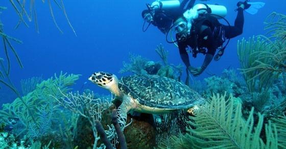 72 Aquatics Turks & Caicos- May 2021
