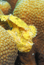 72 Aquatics Bonaire-October 28 through April 5 2020