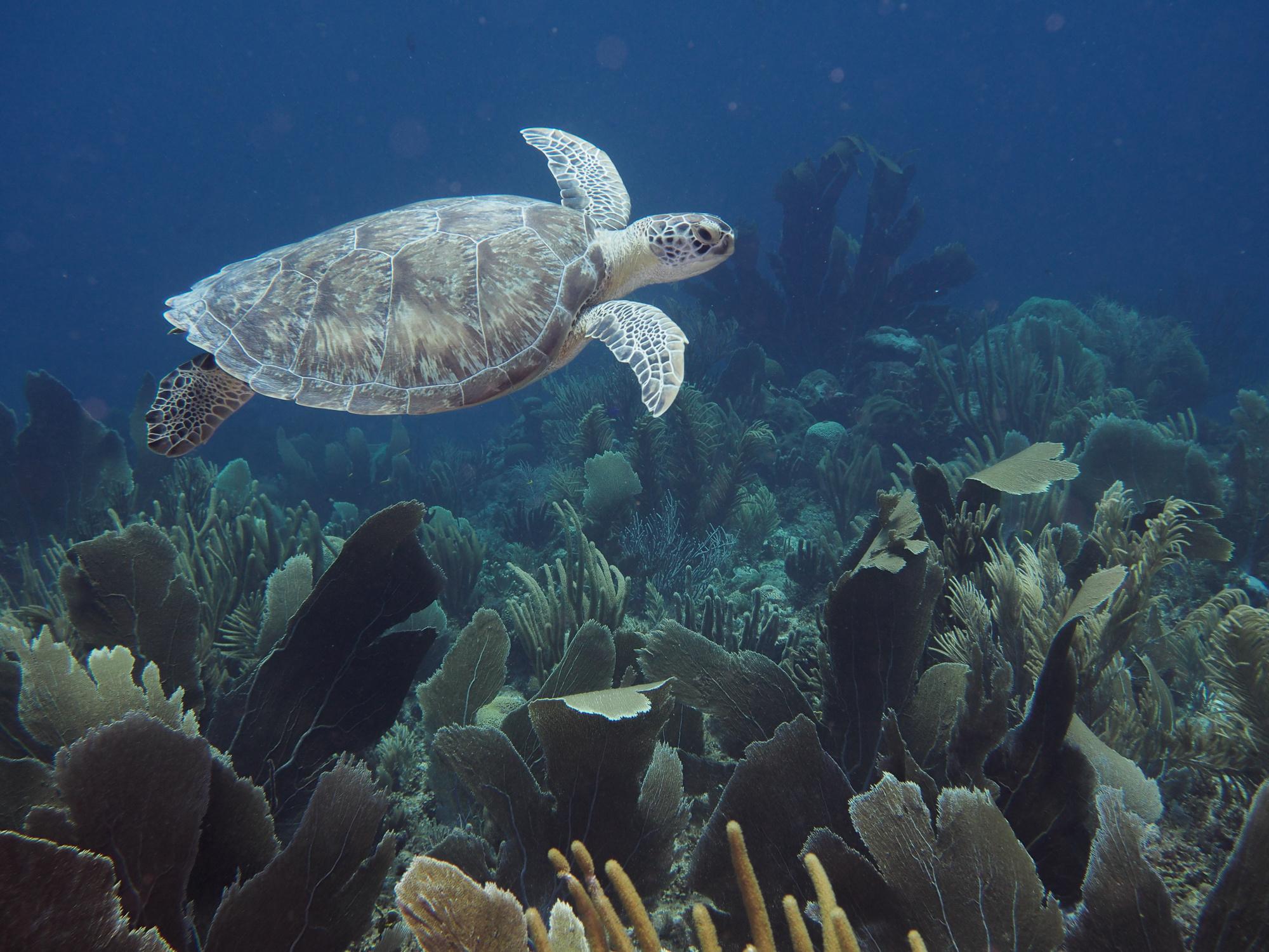 72 Aquatics Bonaire-March 28 through April 5 2020