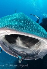 Thailand & Myanmar Nov 2020 Expedition - Undiscovered Mergui Archipelago
