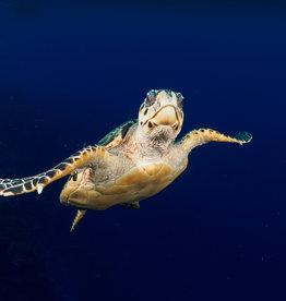 72 Aquatics Cayman Brac - August 2021