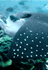 72 Aquatics Cozumel - December 2020