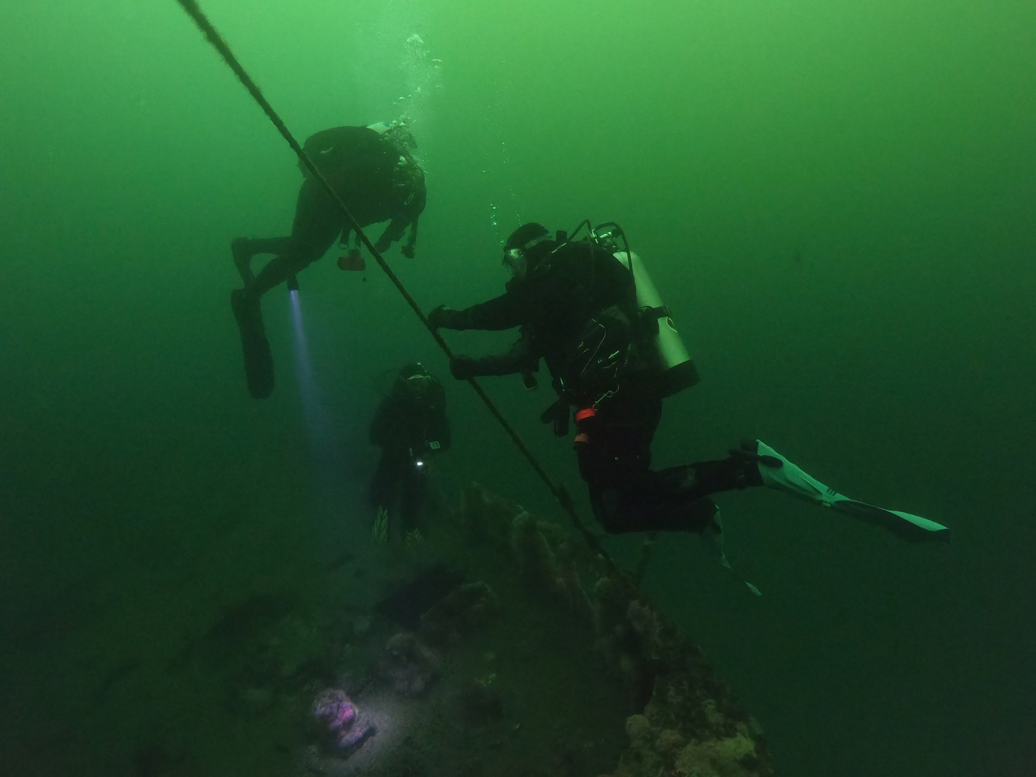 Diving the Kelp Forests of California