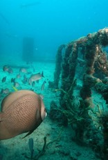 72 Aquatics Open Water Certification - Key Largo