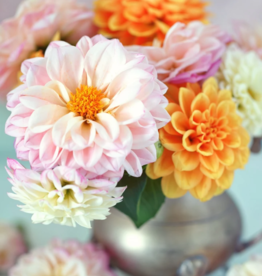 Paint-By-Number - Darling Dahlia