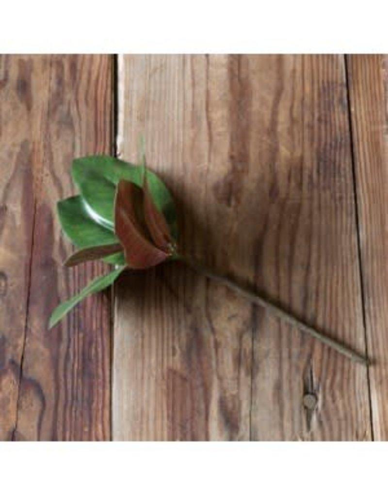 Glossy Magnolia Pick