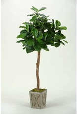 6′ Fiddle Leaf Fig Tree in Weathered Wood Planter