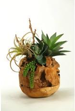 Wild Succulents in Wooden Root Ball