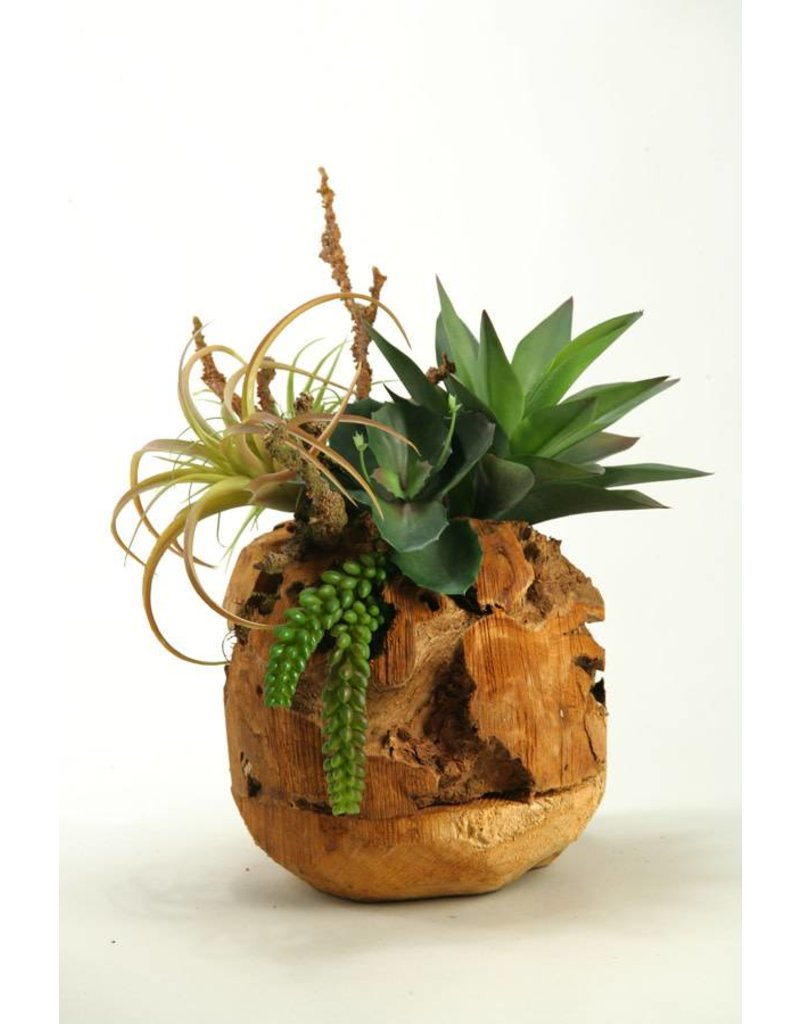Wild Succulents in Wooden Root Ball