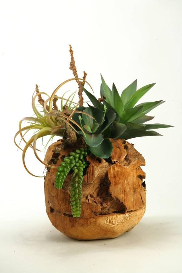 Wild Succulents In Wooden Root Ball Wishbone Home Design