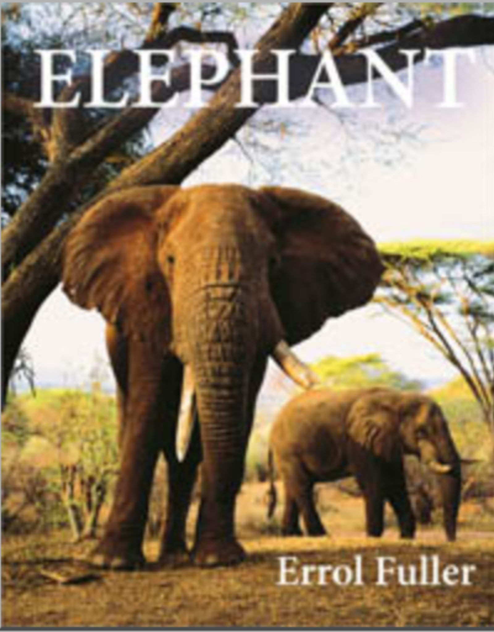 Website Elephant