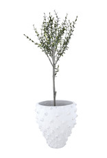 Website Terra-Cotta Planter with Raised Dots