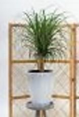 Website Camy Planter