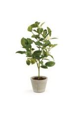 """Lemon Topiary Drop In 20"""""""