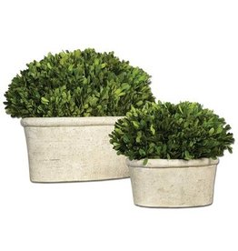 Large Oval Boxwood Preserved