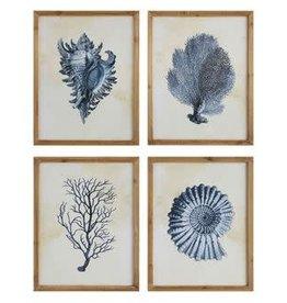 Framed Art Coral & Shells