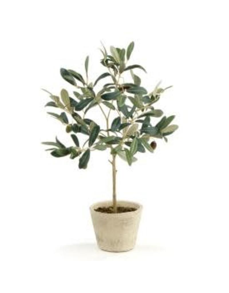 Olive Tree w/ Fruit in Pot