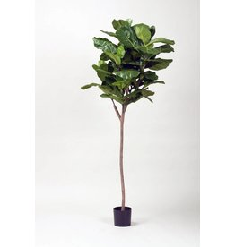 Display 5' Fiddle Fig Leaf Tree
