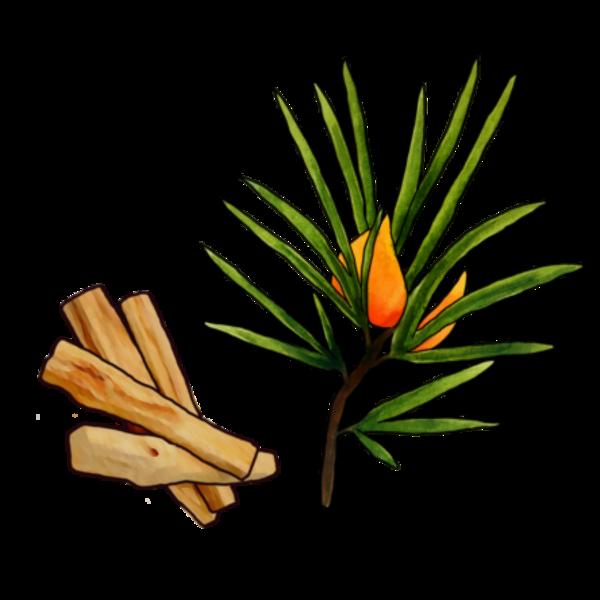 Fine Feathers Roobios + Palo Santo (5.5 GAL KEG)