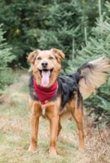 Burgundy Flannel Dog Bandana