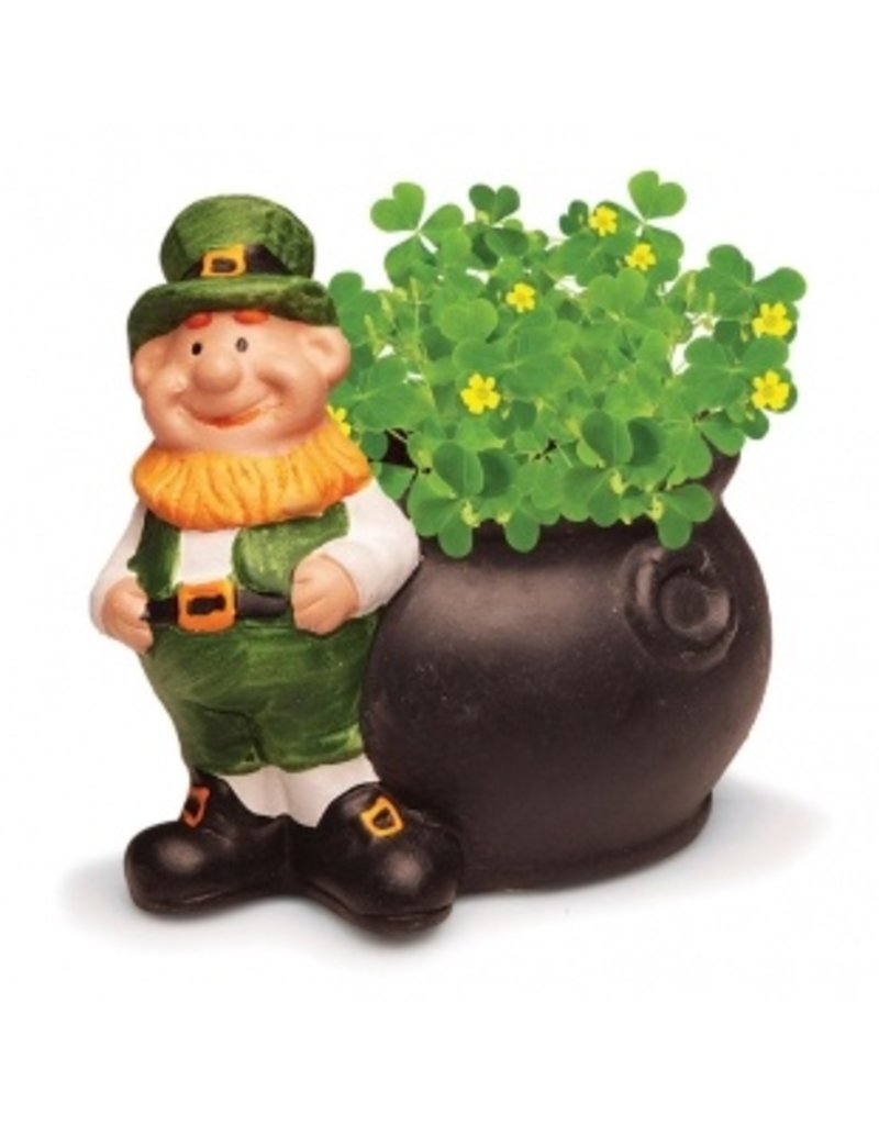 JC Walsh Grow Your Own Shamrock