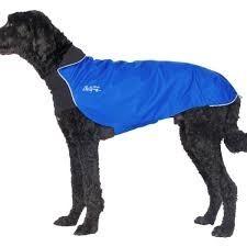 Chilly Dogs Jackets Chilly Dogs Jacket-Trailblazer Royal Blue