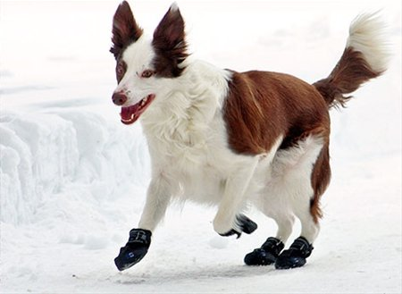 Canine Equipment Canine Equipment-Ultimate Trail Boot