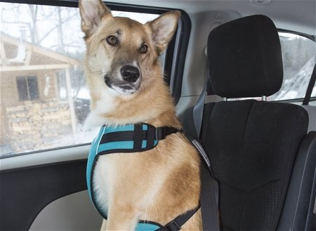 Canine Friendly Canine Friendly-Vented Vest Harness V2 Red