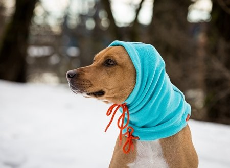 RC Pets RC-Summit Snood