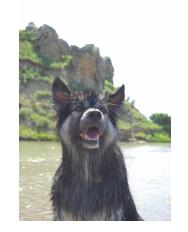 unleashed calgary alberta dog love pet food