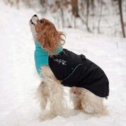 Chilly Dogs Jackets Chilly Dogs Jacket- Great White North ARCTIC BLUE