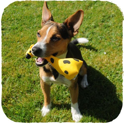 Beco Beco Soft Dog Toys