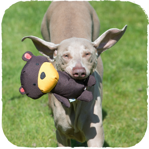 Beco Beco Soft Dog Toys