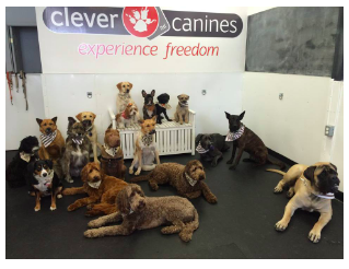 Clever Canine Day School