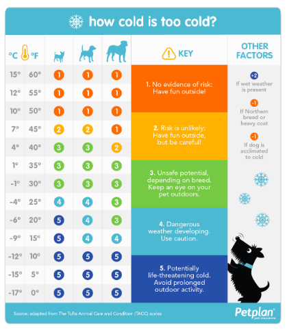 How cold is too cold for your dog this winter?