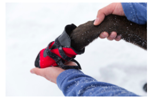 Protect your pet's paws this winter