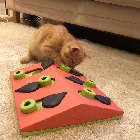 Nina Ottosson Nina Ottosson - Cat Melon Madness Puzzle Toy Advanced