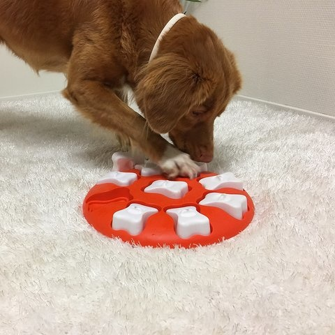 Nina Ottosson Nina Ottosson - Dog Smart Puzzle Toy Easy