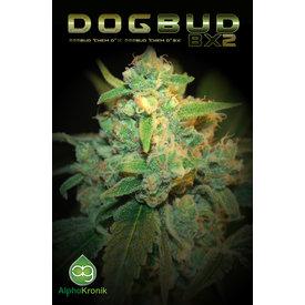 Alphakronik Dogbud Reg 5 pk